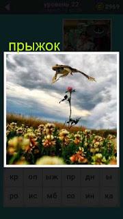 на поле через цветы лягушка совершает прыжок 22 уровень 667 слов