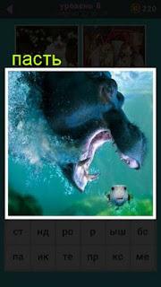 под водой гиппопотам открыл свою пасть и ловит рыбу 667 слов