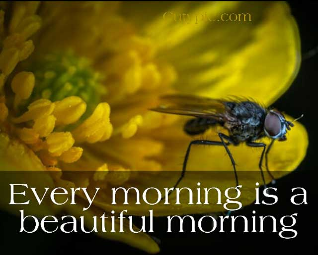 Good Morning Flower Images  Download