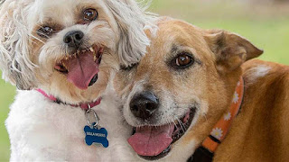 صور كلاب متنوعة رائعة 1