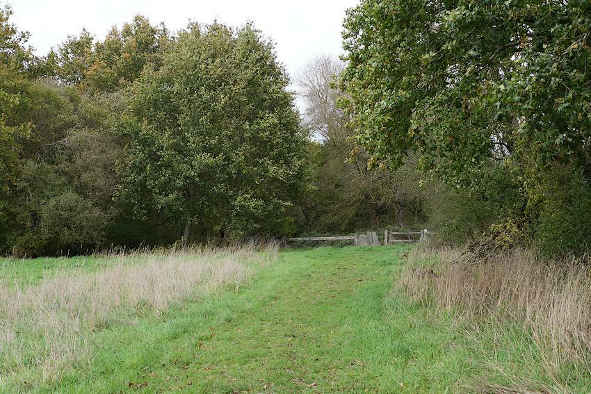 de nombreux chemins parcourent le marais de Gannedel