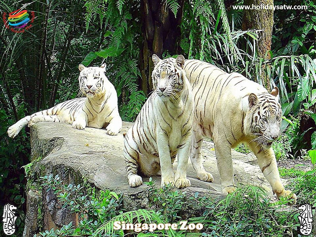 Things to do in Singapore Zoo