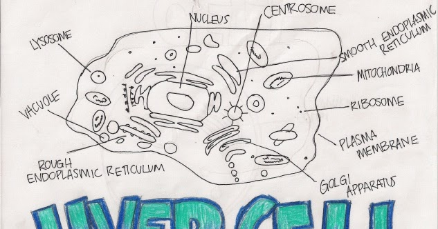 Cell Encyclopedia: 2.3.1 Draw and label (ER, ribosome ... Unicellular Organisms Diagram