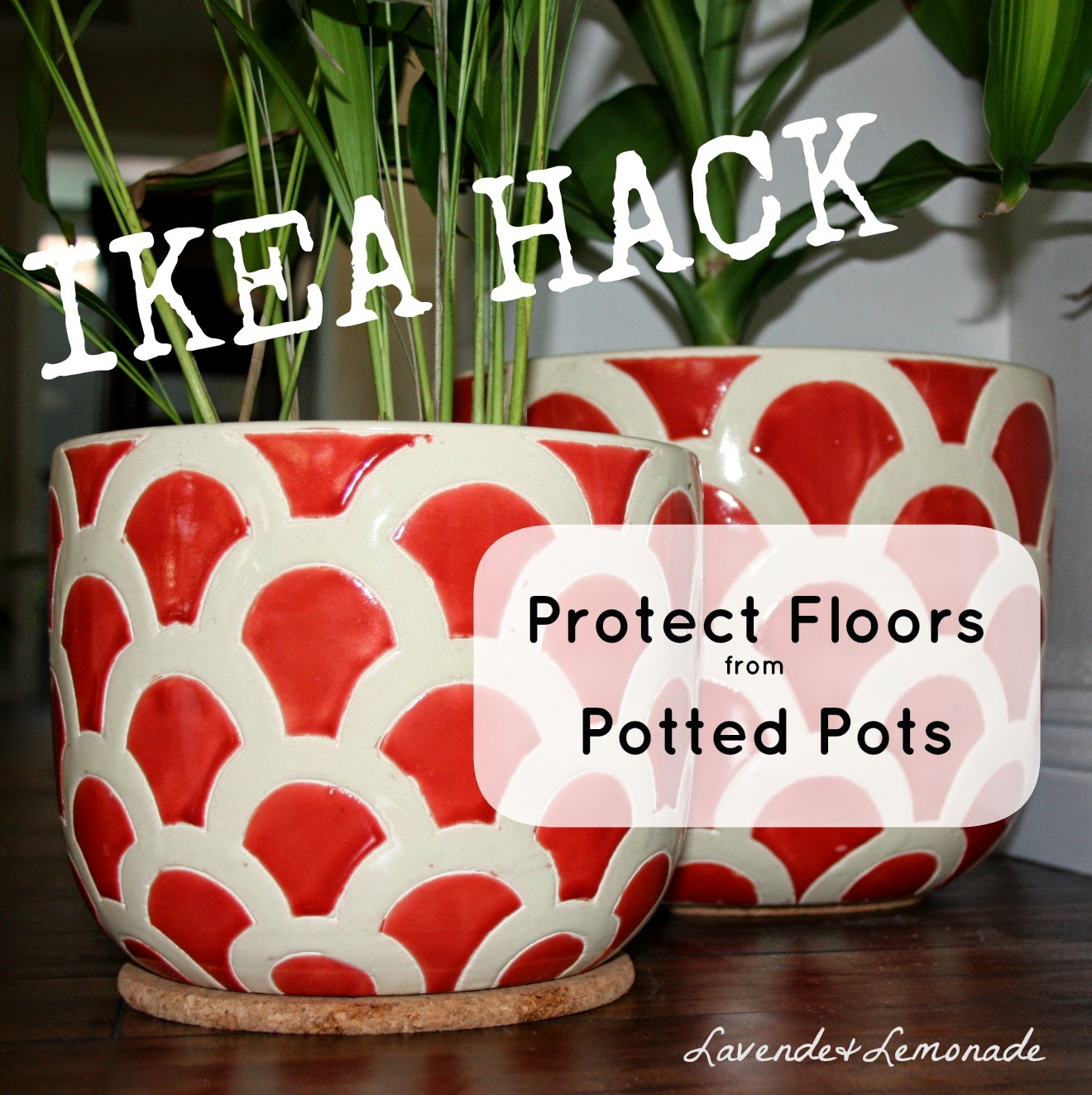 Use cork pads to protect floors from potted plants!