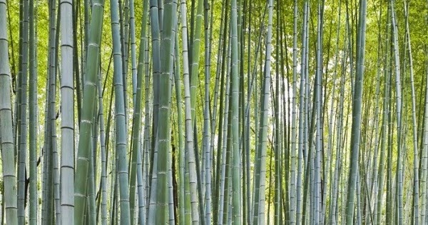 Download Tablet Wallpapers Amazon Kindle Fire Bamboo