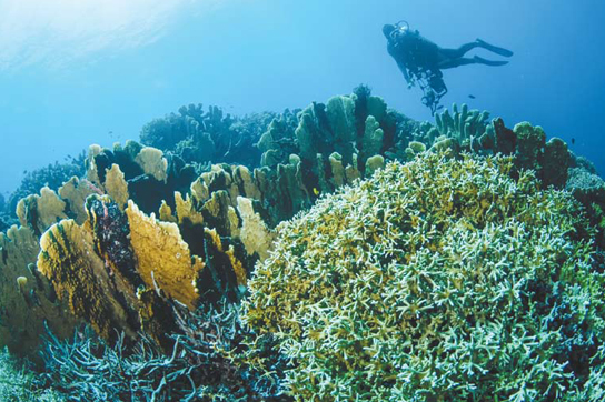 Destinasi Diving Indonesia