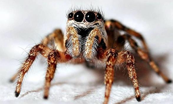 Dedetizadora de insetos Capão Redondo Sp