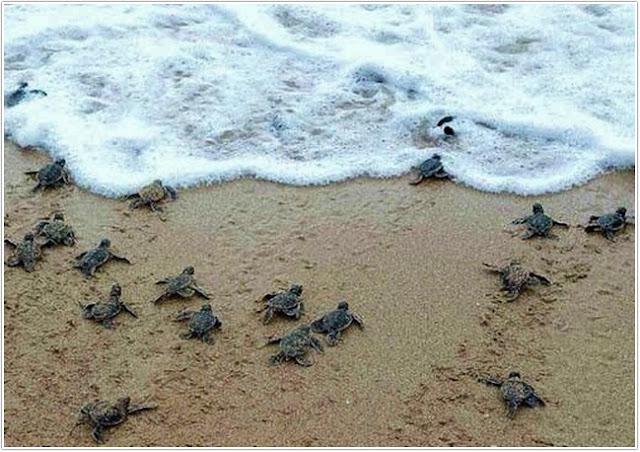 Pantai Taman Kili-kili;Destinasi Wisata Trenggalek ;