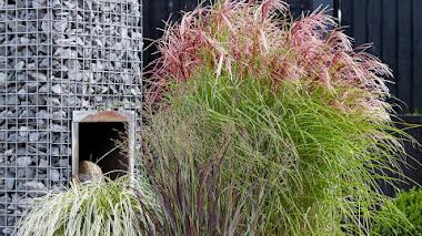 Gramíneas ornamentales para cultivar en macetas y contenedores