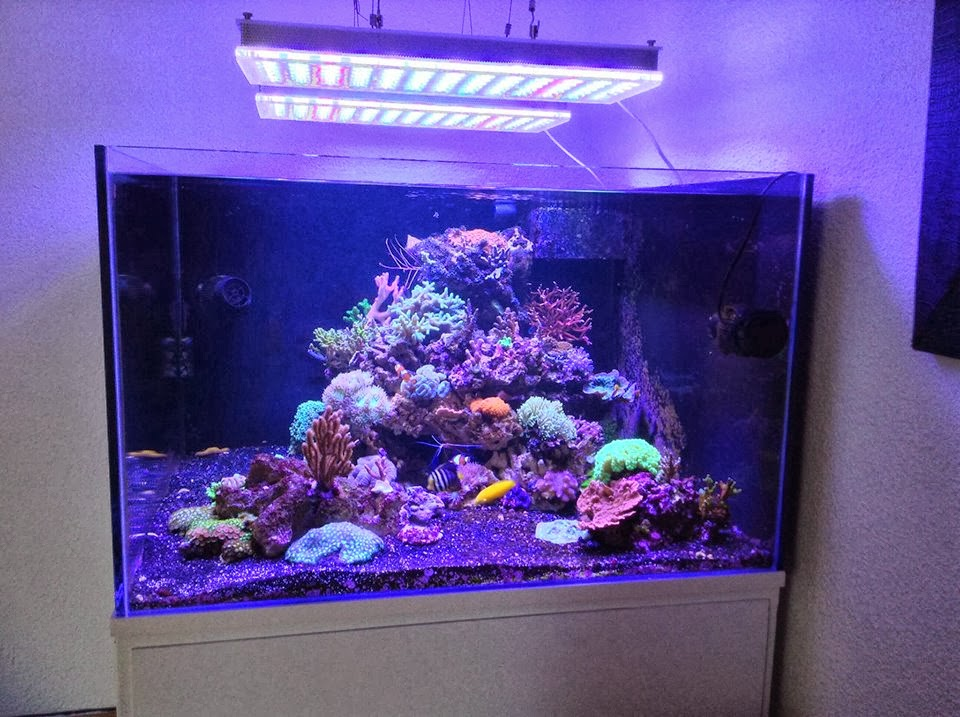 LED Aquarium Lighting Blog | Orphek: September 2013