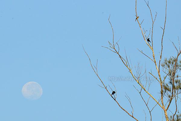 Bird Watching Piasau Nature Reserve