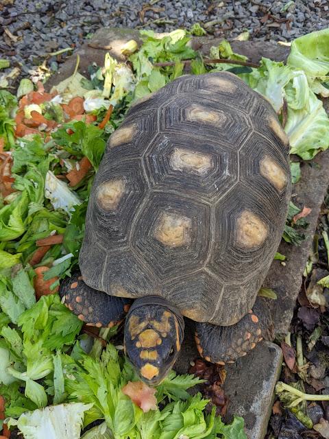 Tortoise Spotlight Three: Introducing Marina Tortoise