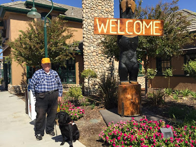 William, in check shirt and yellow hat, stands beside Black Lab Guide Dog Leif. Beside them is a wooden carved black bear holding a Welcome sign in its front paws outside the Black Bear Diner Fresno