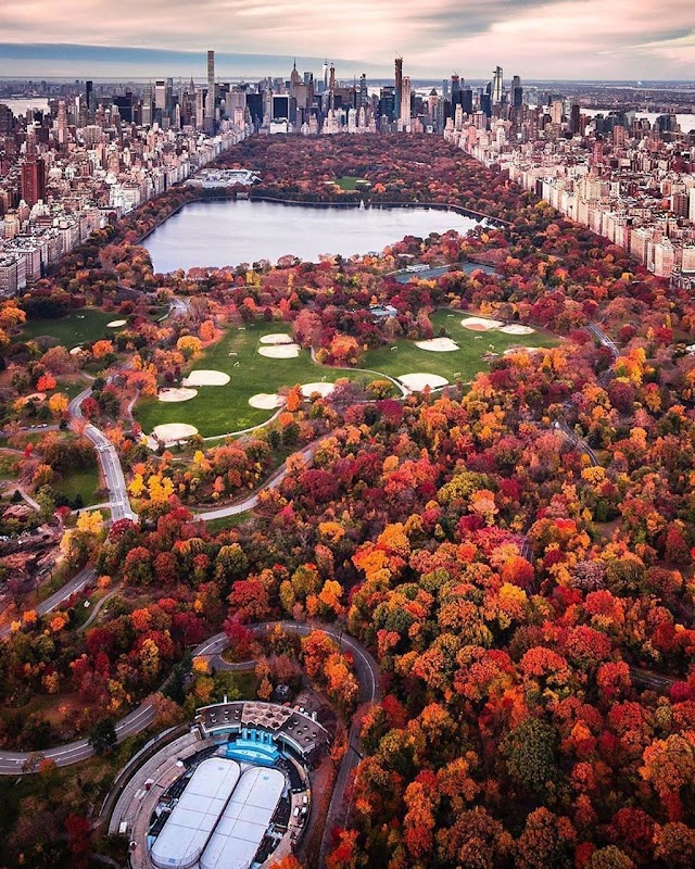 New York's lungs turn yellow in the fall