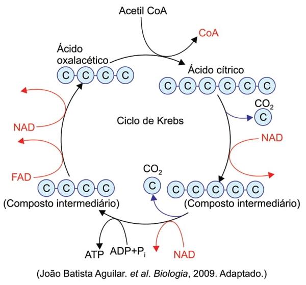 João Batista Aguilar. et al. Biologia, 2009.