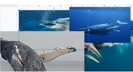 Cara Mudah Membuat Foto Kolase di Google Slide 6
