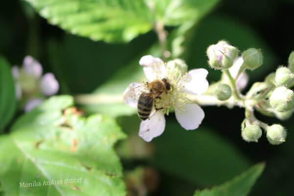 Nahaufnahme Biene / eigene kleine Welt