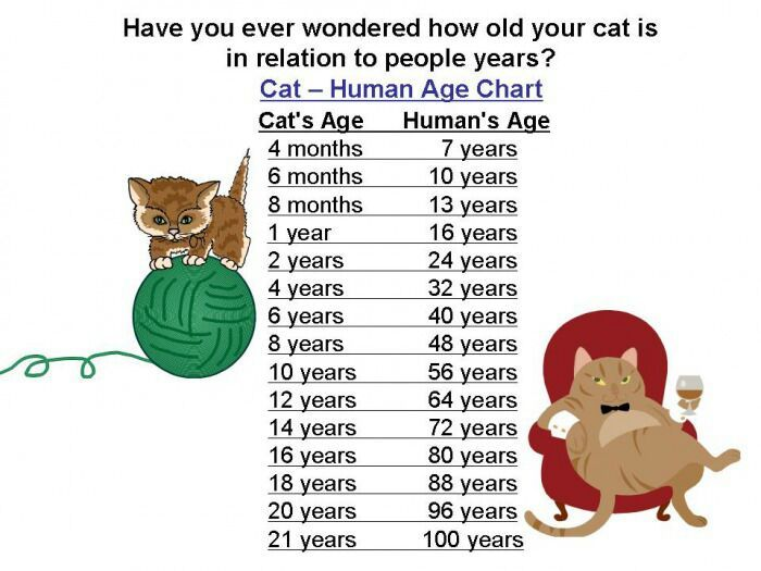 I am not ashamed of my cat years