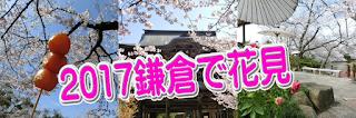 2017鎌倉で花見