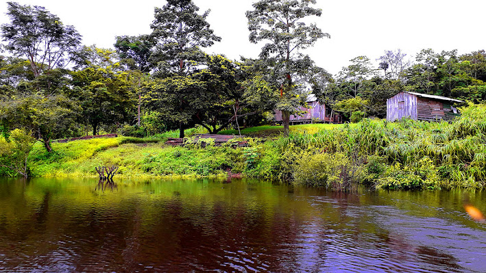 Arqueólogos do Instituto Mamirauá identificaram 48 ilhas construídas por indígenas ao longo de 4 anos. 'Aterrado 21'. Imagem, Márcio Amaral