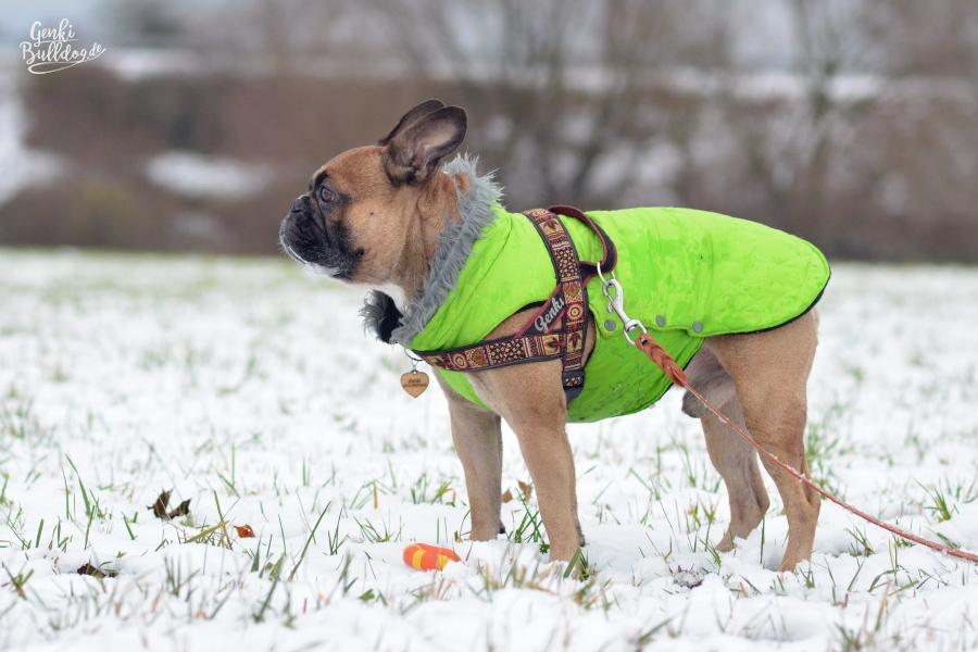 Hundeblog Französische Bulldogge Schnee Mantel Jacke Winter Spaziergang