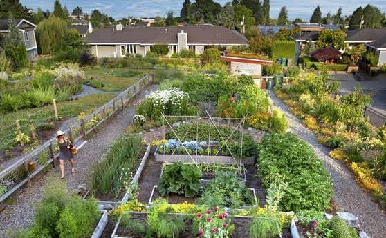 kebun sayur dihalaman rumah