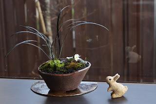 半月の陶盤にのった茶色のそり型の鉢の山野草盆栽とうさぎの人形
