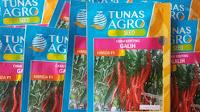 cara menanam cabe di rumah, cabe keriting, benih galih, benih dari tunas agro, jual benih cabe, toko pertanian, toko online, lmga agro
