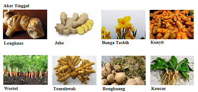 Perkembangan Tumbuhan Secara Vegetatif Alami Dan Buatan