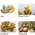 Perkembangbiakan Vegetatif Alami dan Buatan pada Tumbuhan Beserta Contohnya