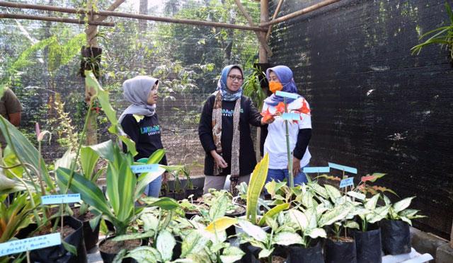 Taman Anggrek Bisa jadi Ekowisata di Lumajang