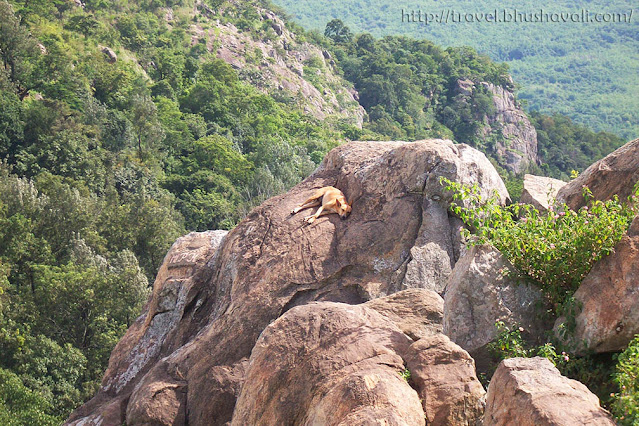 Sleeping dog in Yercaud hills