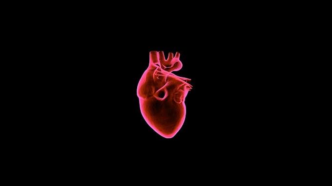 21 Fatos surpreendentes sobre o coração