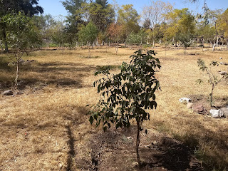 laguna de yuriria lake conservation reforestation ecosystem guanajuato mexico ash fresno tree
