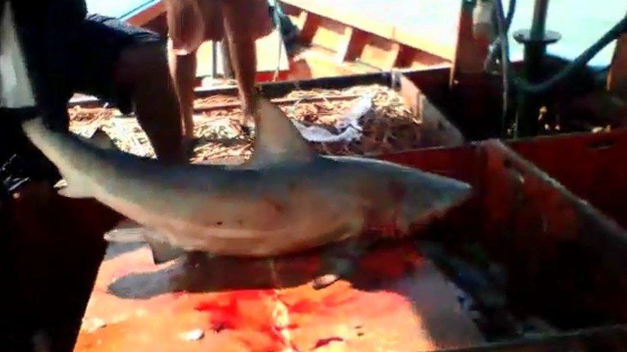 Pescador tenta pegar tubarão em alto mar e acaba sendo mordido no Pará