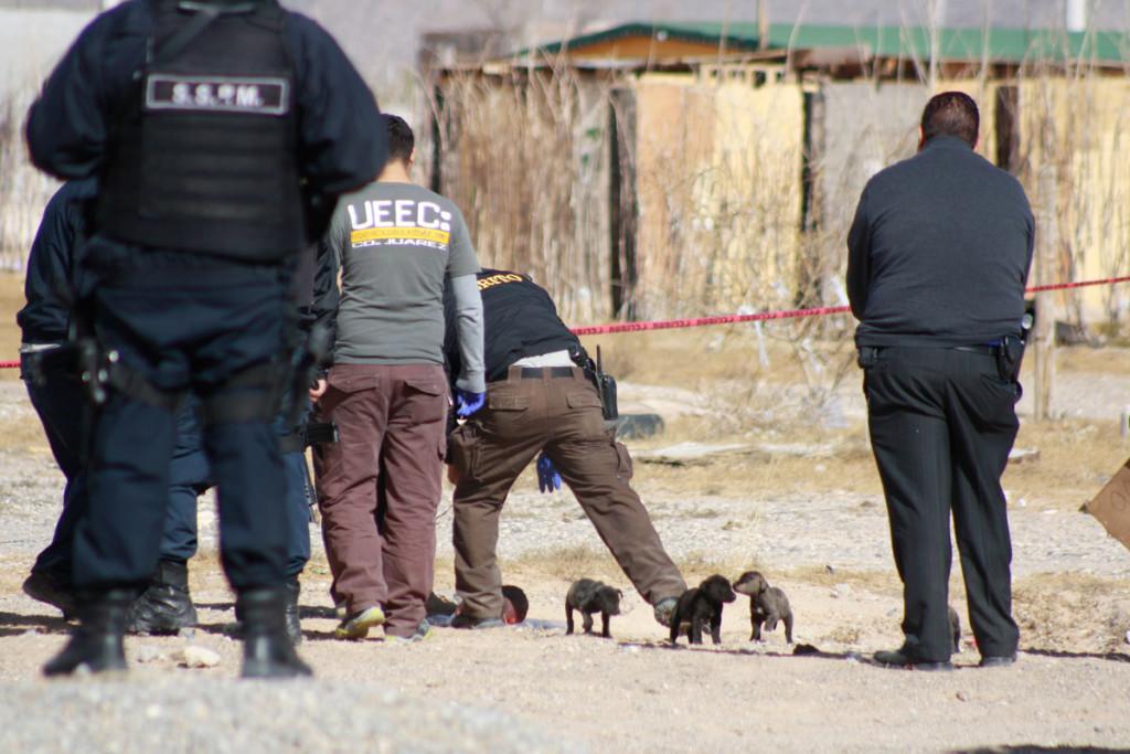 Emboscan a indígenas de Durango en la Sierra Tarahumara; hay tres muertos