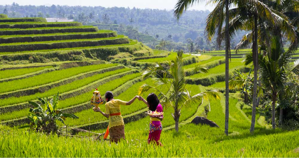Image result for unesco rice terrace bali