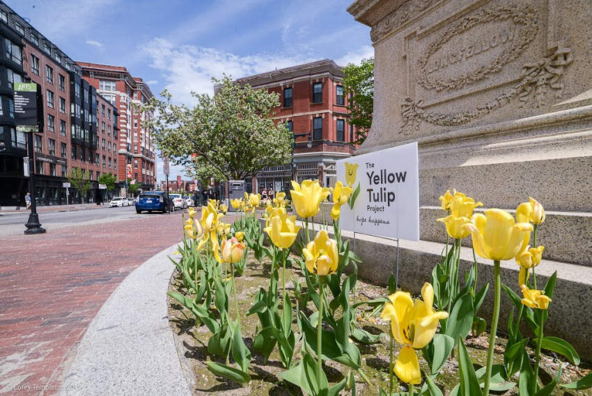 Portland, Maine USA May 2019 photo by Corey Templeton. Flowers blooming in Longfellow Square, part of this year's plantings for the Yellow Tulip Project which raises awareness about mental health.