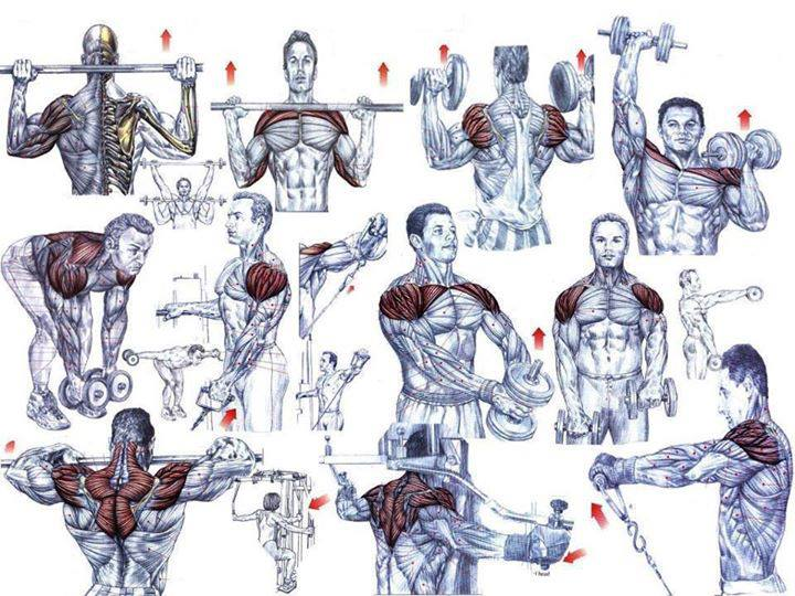 The second phase of the shoulder workouts routine focuses on muscle ...