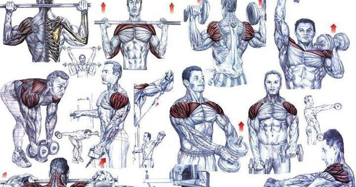 Shoulder Workouts For Mass Muscle Gains - all-bodybuilding.com
