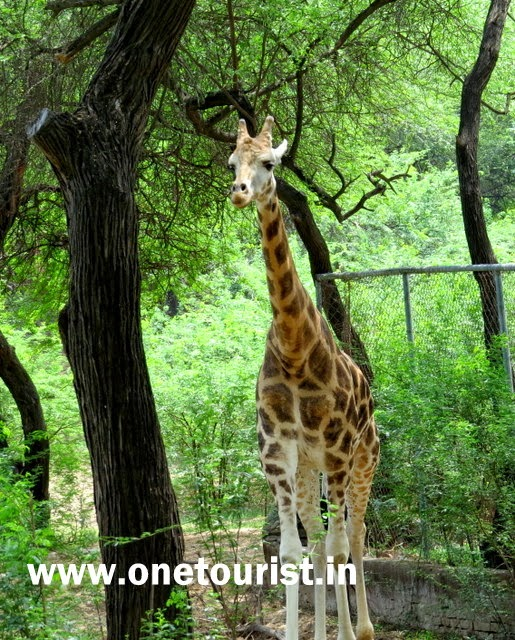 animals and birds at Delhi zoo