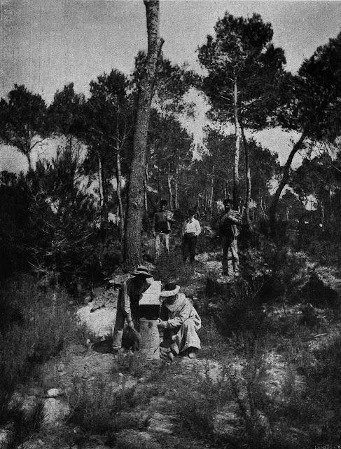 Recogida de Miel de abejas 1919.