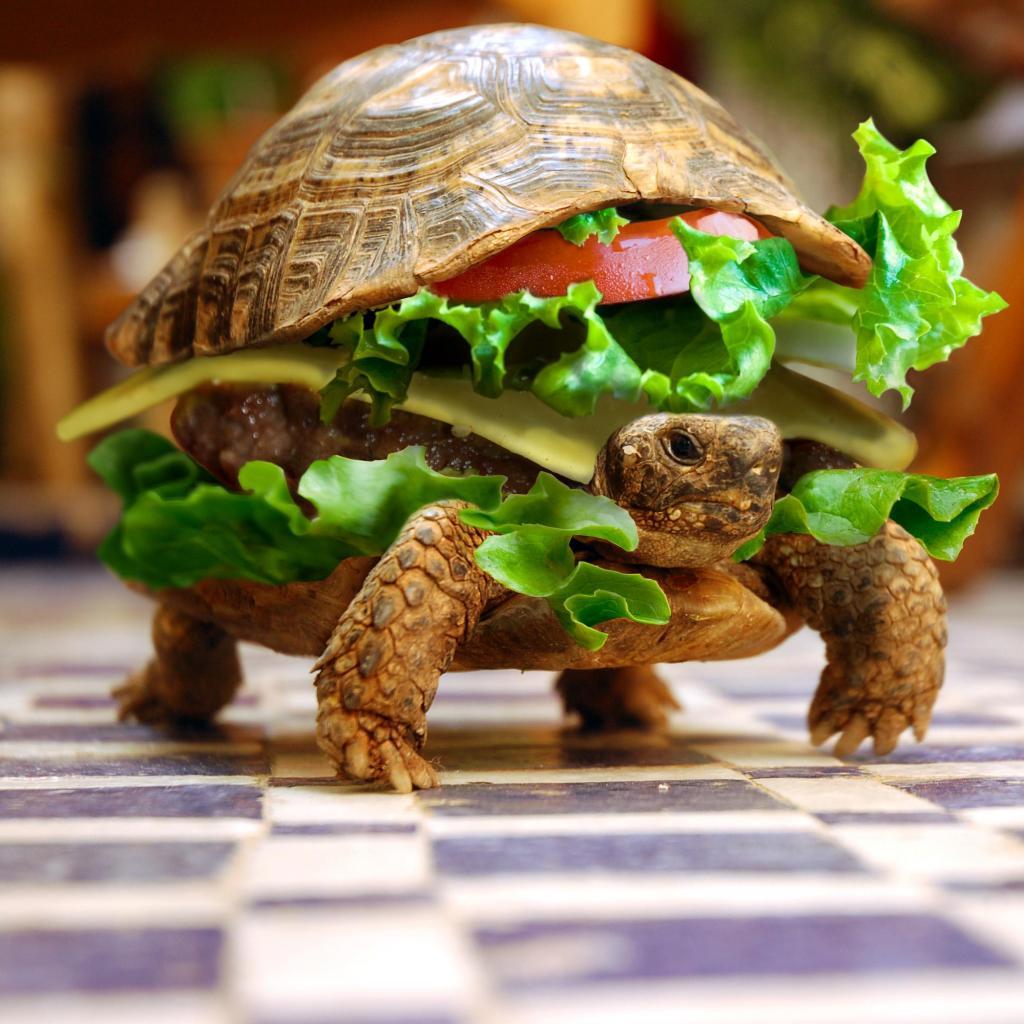 Funny Turtle Wallpaper Desktop