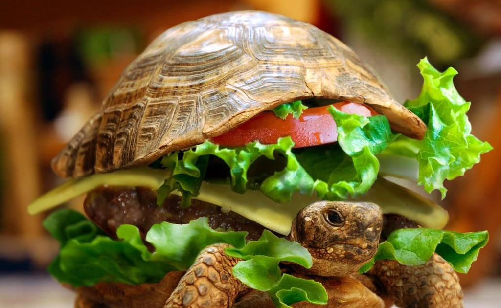 Funny 3d Animal Turtle Wallpapers Hd: Funny Turtle Wallpaper Desktop
