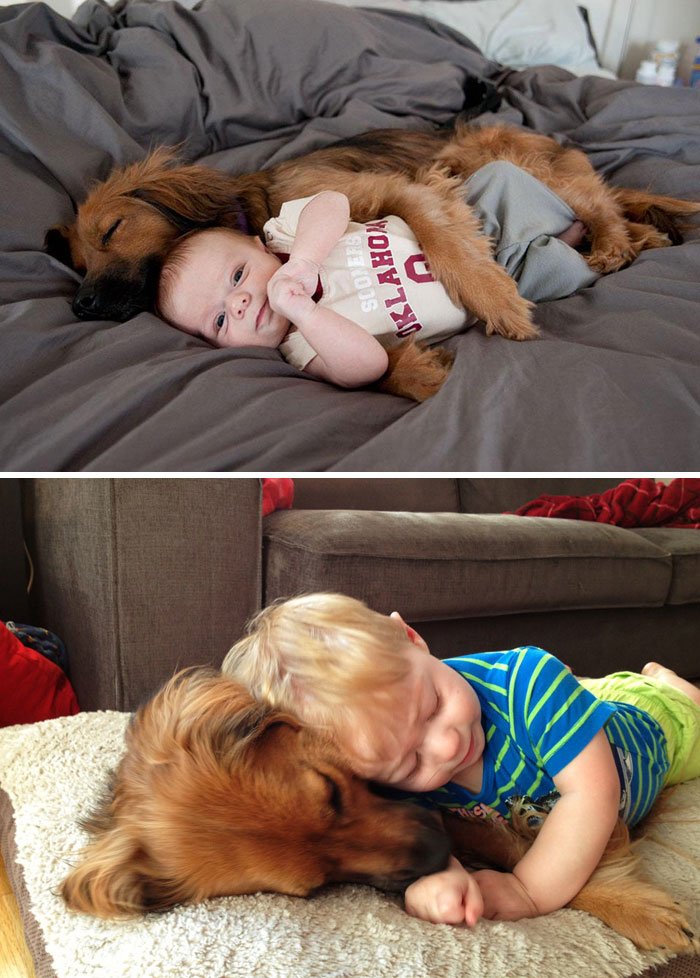 30 Heart-Warming Photos Of Dogs Growing Up Together With Their Owners - First 9 Months Together