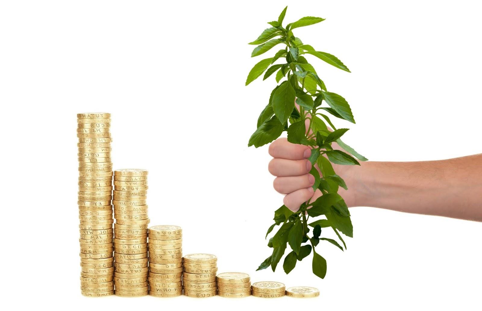 Investment money tree image