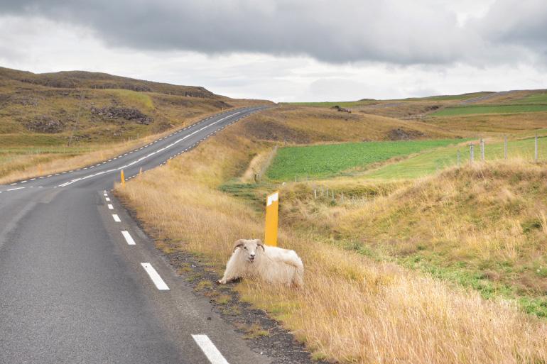 Séjour en Islande - route vers l'ouest islandais