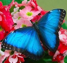 Притча-легенда о бабочке