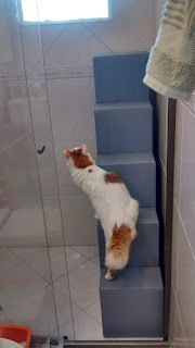gatos na área de serviço