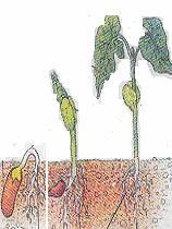Definisi Pertumbuhan dan Perkembangan